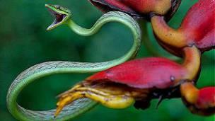 serpiente vid copes